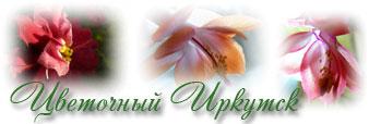 Цветочный Иркутск, форум